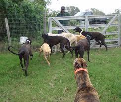 GHs behind fence