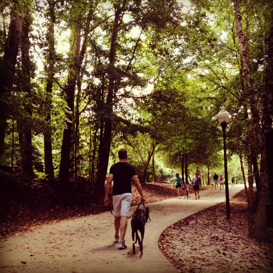 Kite_a walk in the park