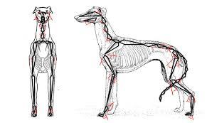 GH anatomy_2