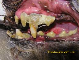 GH dental disease